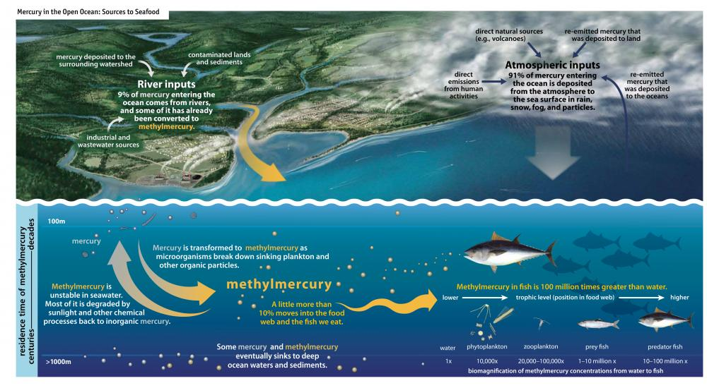 oceans act of 2000 essay Amitai etzioni possible solutions to the world's energy, food, environmental, and other problems are far more likely to be found in nearby oceans than in distant space.