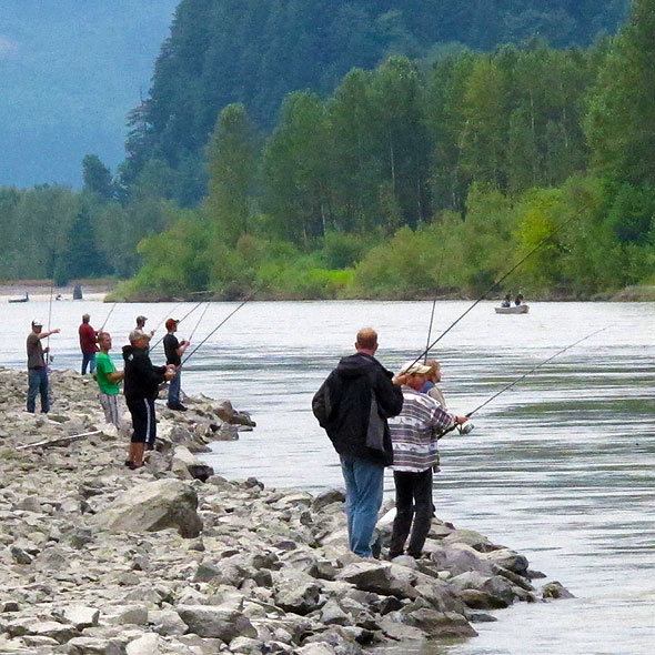 Salmon counts break records from alaska to the columbia for Salmon fishing columbia river